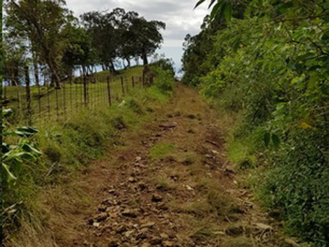 route Bois de Néfles